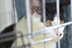 Проарретированный черно-белый кот Стоковое фото RF