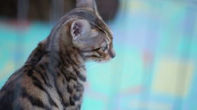 проарретируйте кота сток-видео