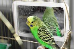 _ проарретируйте попыгая зеленый попыгай стоковое фото