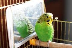 _ проарретируйте попыгая зеленый попыгай стоковое фото rf