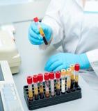 Пробирки с кровью Стоковое фото RF