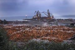 Проблемы обезлесения экологические Стоковое Изображение RF