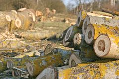 проблемы окружающей среды Стоковая Фотография