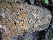 Пробочка на дереве Стоковое фото RF