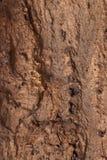 пробочка расшивы внутри естественной текстуры Стоковое Фото