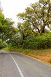 Пробочки пересечение дорог леса дуба в горах Arrabida Стоковые Фото