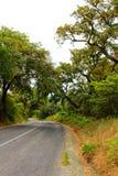 Пробочки пересечение дорог леса дуба в горах Arrabida Стоковое фото RF