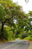 Пробочки пересечение дорог леса дуба в горах Arrabida Стоковое Фото