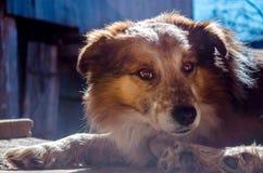 пробуренная собака Стоковое Изображение