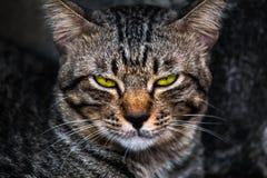 Пробуренная сторона кота стоковая фотография