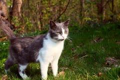 пробуренный кот Стоковое фото RF