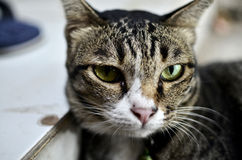 пробуренный кот стоковые изображения rf