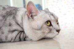 пробуренный кот Стоковое Изображение RF