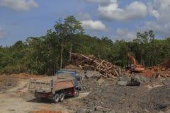 Проблема окружающей среды обезлесения Стоковое фото RF