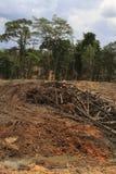 Проблема окружающей среды обезлесения Стоковые Изображения RF
