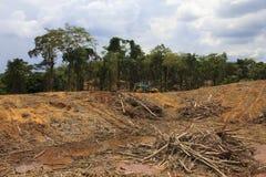 Проблема окружающей среды обезлесения Стоковое Фото