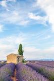 Провансаль, плато Valensole стоковое фото