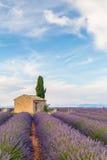Провансаль, плато Valensole стоковые фото