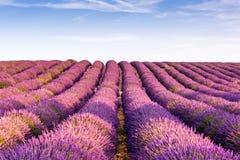 Провансаль, Франция, плато Valensole с фиолетовым полем лаванды Стоковые Изображения