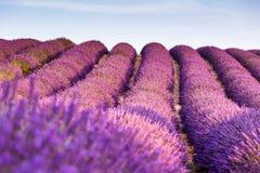 Провансаль, Франция, плато Valensole с фиолетовым полем лаванды стоковая фотография rf