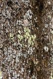 Прованская кора дерева Стоковые Изображения