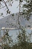Прованские листья с предпосылкой море и корабль стоковое фото