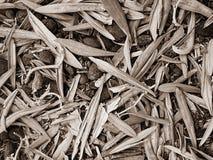 Прованские семена и сушат листья черно-белые Стоковое Фото
