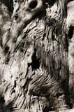 прованский ствол дерева стоковая фотография