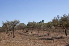 Прованское растущее к югу от Франции Стоковая Фотография