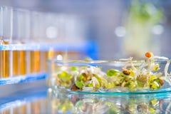 Проверка качества backgroun ростков фасоли, научных или медицинских Стоковое Изображение