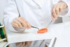 Проверка GMO Стоковые Изображения