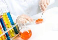 Проверка GMO Стоковое фото RF