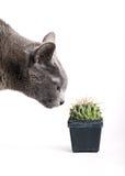 проверять кота кактуса пытливый spiny Стоковые Изображения RF