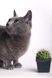 проверять кота кактуса пытливый spiny Стоковое Изображение RF