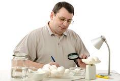 Проверять на белых яичках цыпленка Стоковые Фото