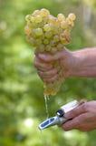 проверять сахар виноградины состязания стоковые фотографии rf