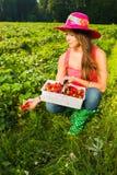 Проверять ягоды стоковое изображение rf