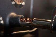 Проверяющ свеже зажаренные в духовке кофейные зерна - мягкий фокус Стоковые Фото