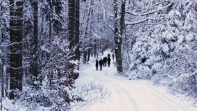 Проветривание зимы Стоковое Изображение RF