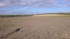 Проветрите взгляд HD, засаживая поле, Millenary дуб Holm около Mengibar видеоматериал