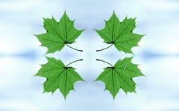 проветрите листья летания Стоковое Изображение