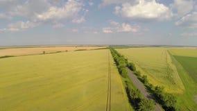 Проветрите съемку от дороги бежать через пшеничное поле акции видеоматериалы