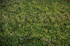 провинция Вьетнам плантации khanh hoa банана Стоковая Фотография
