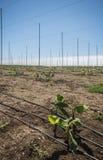 провинция Вьетнам плантации khanh hoa банана Стоковая Фотография RF