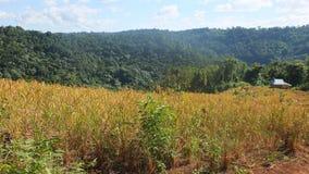 Провинция Камбоджи Mondulkiri Стоковые Фотографии RF