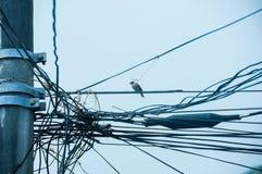 Провода электричества Стоковые Изображения