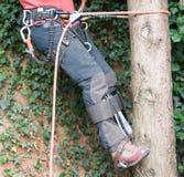 Проводка ` s хирурга дерева стоковое изображение rf