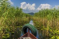 Проводящ через тростники на озере Skadar, Черногория в лете стоковое фото rf