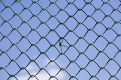 провод загородки Стоковая Фотография