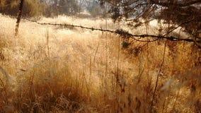 провод колючей загородки старый Стоковые Фотографии RF